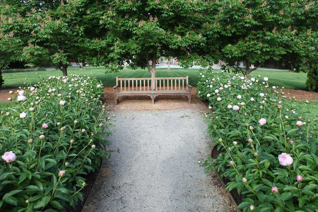 church park bench peonies