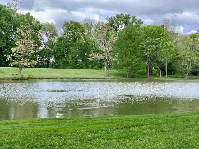 Indiana's attempt at utopia: New Harmony . . . . . . . . . #newharmony #newharmonyindiana #newharmonyin #indiana #myindiana #visitnewharmony #visitnewharmonyindiana #historicnewharmony #historicnewharmonyindiana #swans #swan #swansofinstagram #lake #lakes #lakesofinstagram #pond #pondsofinstagram #ponds #southernindiana #indiana #hoosierstate #visitindiana #h2gindiana #onlyinindiana #only_in_indiana #utopian #utopia #green #greenery #killaframez #artofvisuals